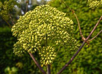 Terpenes Uses